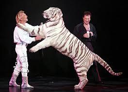download mp3 dangdut las vegas terbaru las vegas white tigers attack explore kerinci