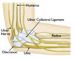 Tendons In The Shoulder Diagram Elbow Injuries In The Throwing Athlete Orthoinfo Aaos