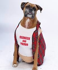 Hilarious Costumes Smartest Dog Top 13 Photos Of Hilarious Dogs In Costumes