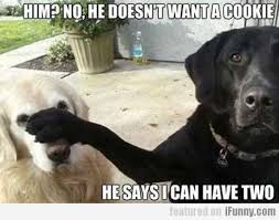 Cute Dog Memes - 66 funny pictures you will absolutely love funny pictures animal