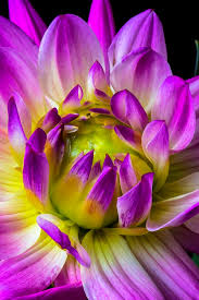 Very Pretty Flowers - 222 best flowers images on pinterest flowers pretty flowers and