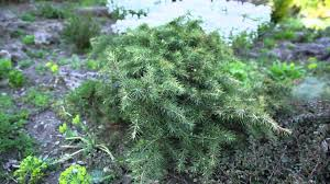plants for rock gardens that stay small youtube