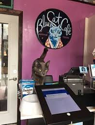 best cat cafes in the us