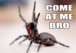 Spider Bro Meme - image 561811 come at me bro know your meme