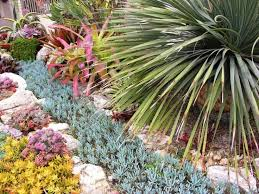 241 best succulent outdoor design ideas images on pinterest