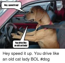 Dog Lady Meme - hey speeditup you drive like an old catlady hey speed 20416906 png