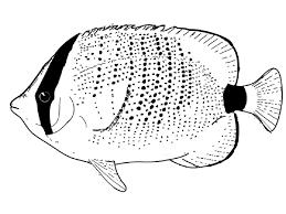 fish color page for kindergarten kiddo shelter