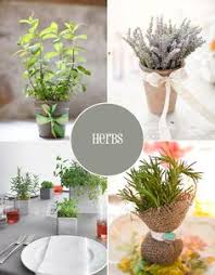 Potted Plants Wedding Centerpieces by Tiny Pots Of Herbs For Place Cards Tablescape Centerpiece Www
