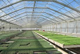 commercial greenhouse continental natural ventilation gothic