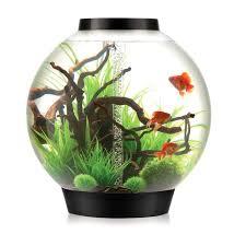 the 25 best biorb fish tank ideas on fish tanks fish