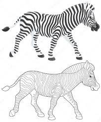 zebra walking u2014 stock photo alexbannykh 9260157