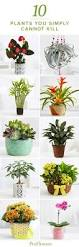 Best Plants For Bathroom Best Plants For The Bathroom Bathroom Designs Plants And Bathroom