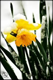 the 50 best images about n frozen fall and spring on pinterest
