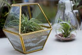 diy sand art terrariums colasanti u0027s tropical gardenscolasanti u0027s