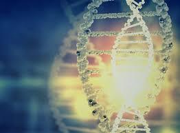 adresse siege social samsung archigen biotech