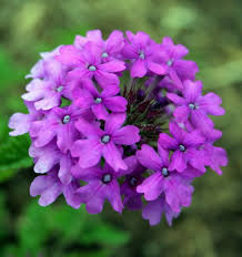 Patio Plants For Sun 22 Best Flowers For Full Sun Heat Tolerant Flowers For