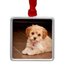 maltipoo pet ornaments keepsake ornaments zazzle