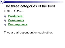 producers consumers and decomposers