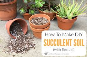 diy succulent to make your own succulent soil with recipe