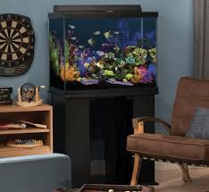 Decoration Of Fish Tank Best 55 60 Gallon Fish Tank With Stand And Aquarium Kit For Sale