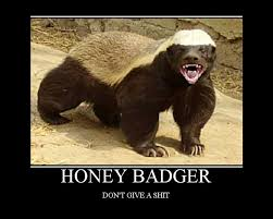 Honeybadger Meme - awesome also known as the ex wife honey badger meme wallpaper site