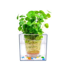 flower pot aquarium transparent self watering mini plant pot fish