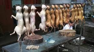 chien cuisine chine faire la popote avec du chien n est plus très en vogue un