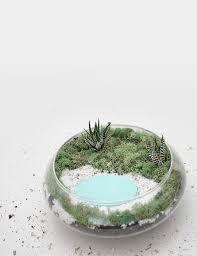 diy palm springs inspired succulent terrarium video