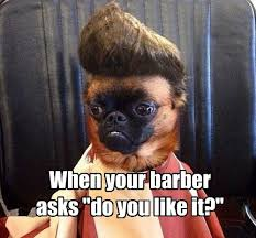 Frowning Dog Meme - maybe i just need to wash it once i has a hotdog dog pictures
