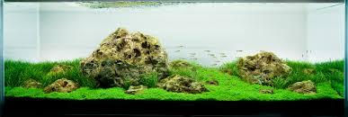 cuisine best images about aquarium on cichlids poland aquascape