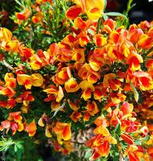 Flowering Shrubs For Partial Sun - 177 best flowering shrubs images on pinterest flowering shrubs
