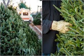 photo gallery a christmas tree farmer