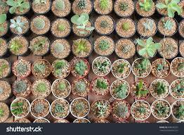 flower pot sale cactus u2013 nok create