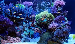 types of saltwater aquariums u2013 the aquarium setup filtration and