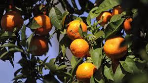 global markets futures slide spooked orange juice futures soar as hurricane barrels towards florida