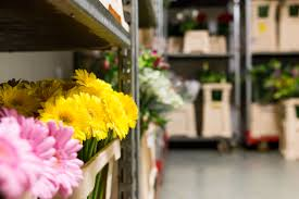 chambre froide fleuriste comprendre pourquoi les fleurs coûtent cher