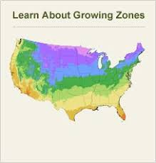 What Are The Gardening Zones - about japanese tree lilac u2013 tips for growing japanese lilac trees