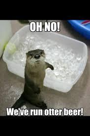 Sea Otter Meme - image result for fabulous sea otters meme otters pinterest