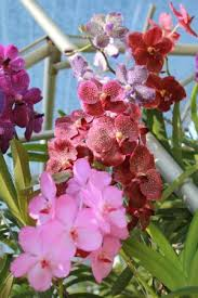 bai orchid and butterfly farm picture of bai orchid and