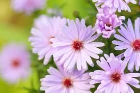 fleurs vivaces rustiques des plantes à floraison longue pour un jardin fleuri toute l u0027année