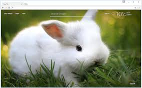 theme google chrome rabbit cute bunny rabbit wallpaper hd new tab chrome web store