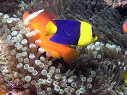 tracking the marine aquarium trade