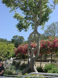 Most Amazing by 7 Of The World U0027s Most Unbelievable Trees