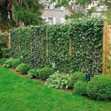 garden climbing plant in fences versatile garden climbing plant