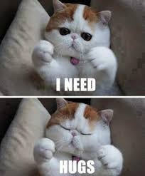 Cute Memes - 101 best cute cat memes that will make your heart melt alley cat