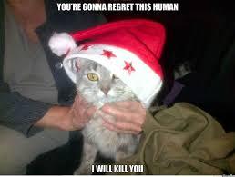Cat Christmas Memes - top ten cute cute funny cats