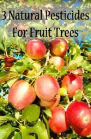 3 natural pesticides for fruit trees your best diy projects