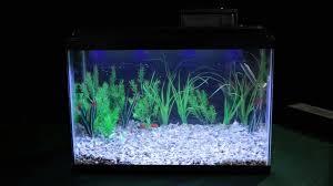 marineland aquatic plant led lighting system w timer 48 60 marineland hidden led light overview big al s youtube