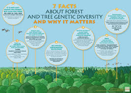 facts about forest and tree genetic diversity and why it matters