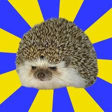 Hedgehog Meme - disapproval hedgehog meme generator